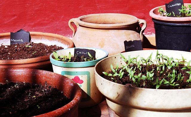 aromatické byliny.jpg